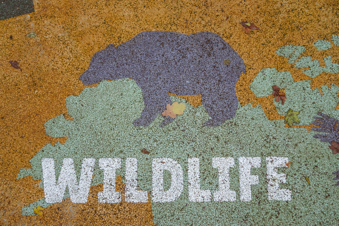 Floor graphics of a bear in the wild forests of north America.